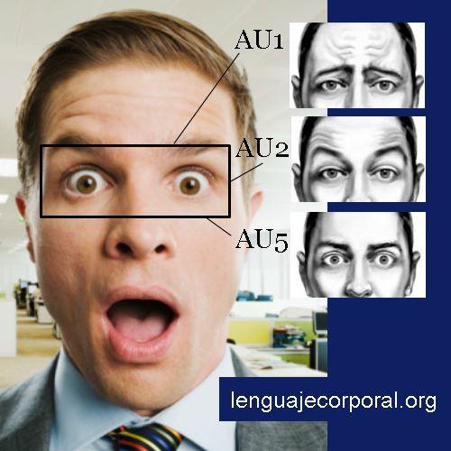Las Aus En Unos Ojos Sorprendidos Lenguaje Corporal Expresiones Faciales Emociones