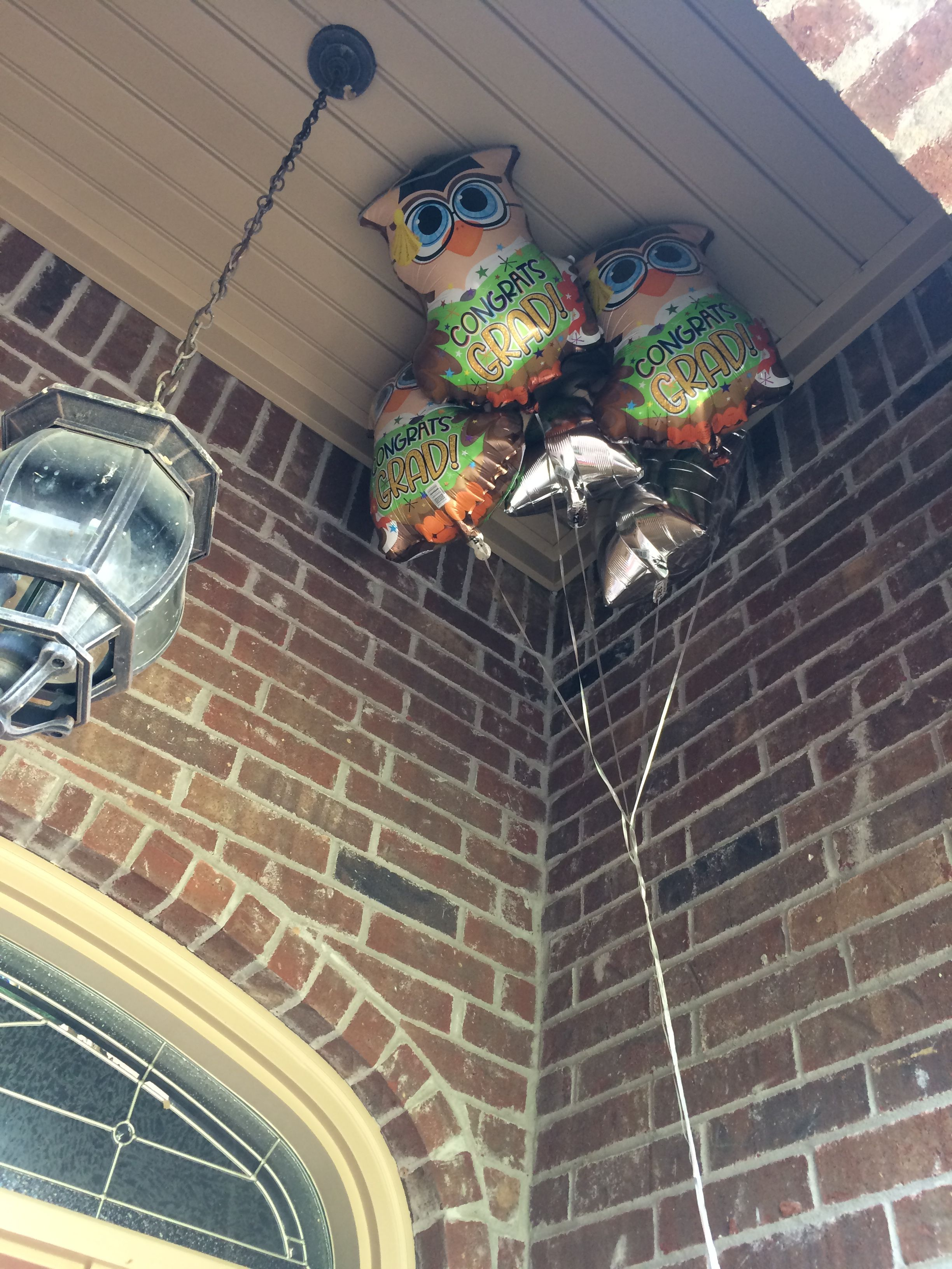 How to get rid of swallows and other birds nesting under