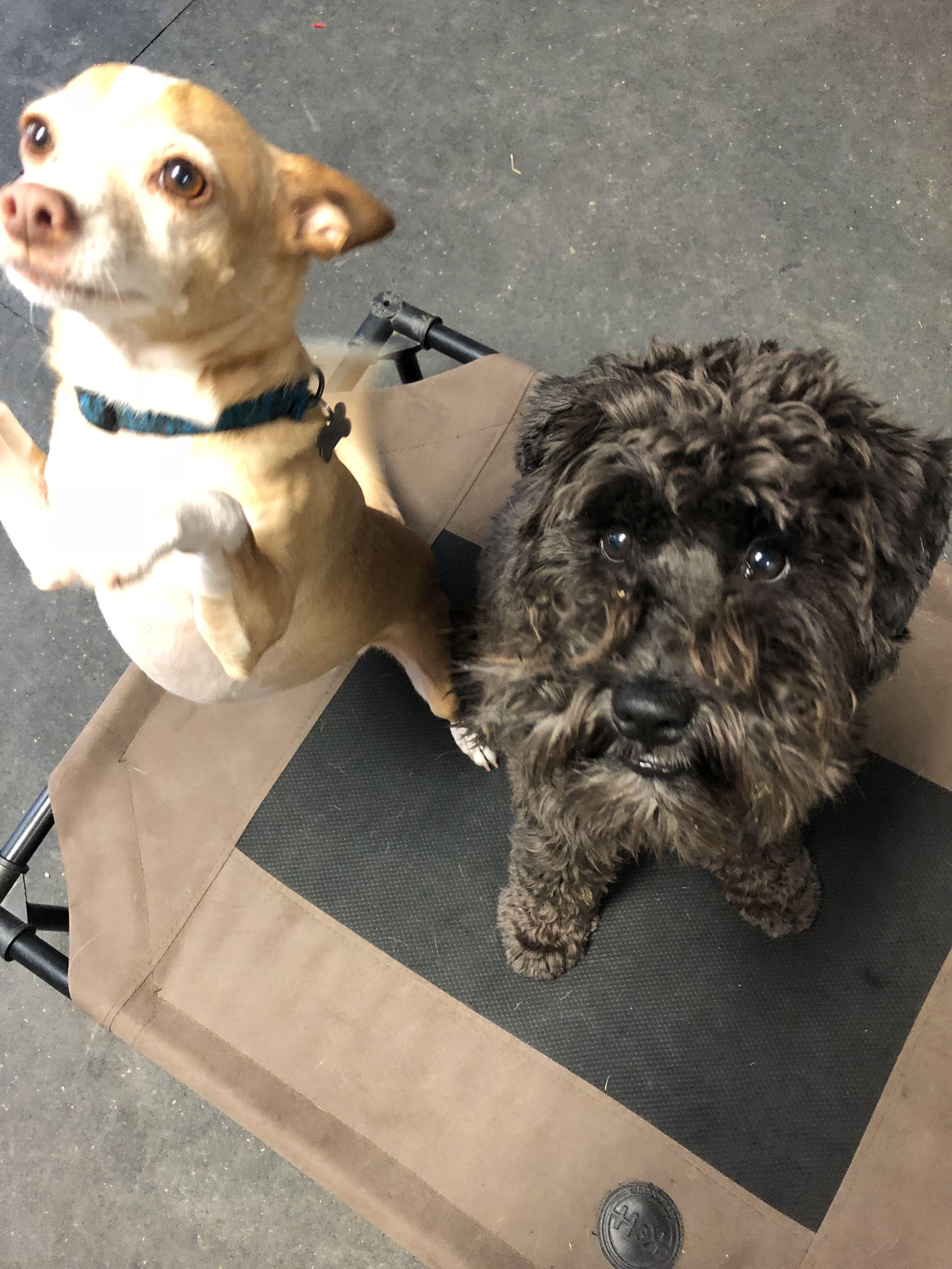Puppy training camp los angeles