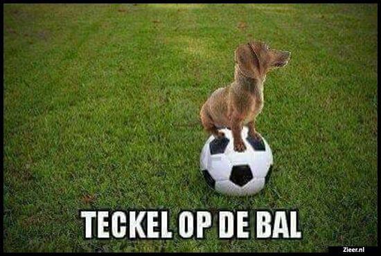 Grappige Citaten Voetbal : Teckel op de bal humor pinterest grappig en teksten