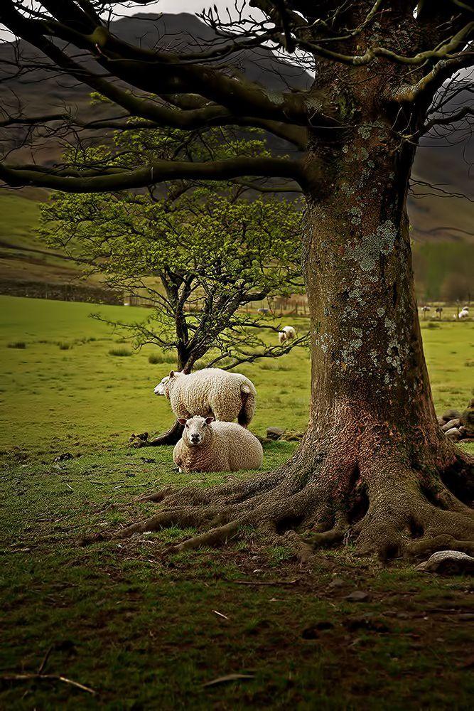 The King S England Cm Animals Beautiful English Countryside Scenery