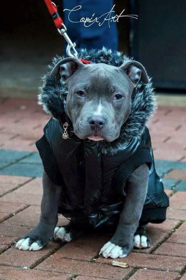 Winter Dog Coats Sweaters And Jackets Nanny Dog Dogs
