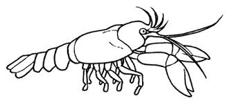 Resultado De Imagen Para Disegni Di Foche Fantasie Moose Art