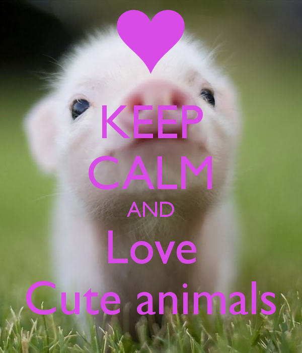 keep calm and Love Cute animals
