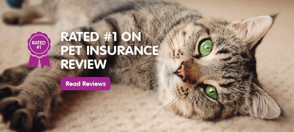 Pets Plus Us, 1 pet insurance Pet insurance for dogs