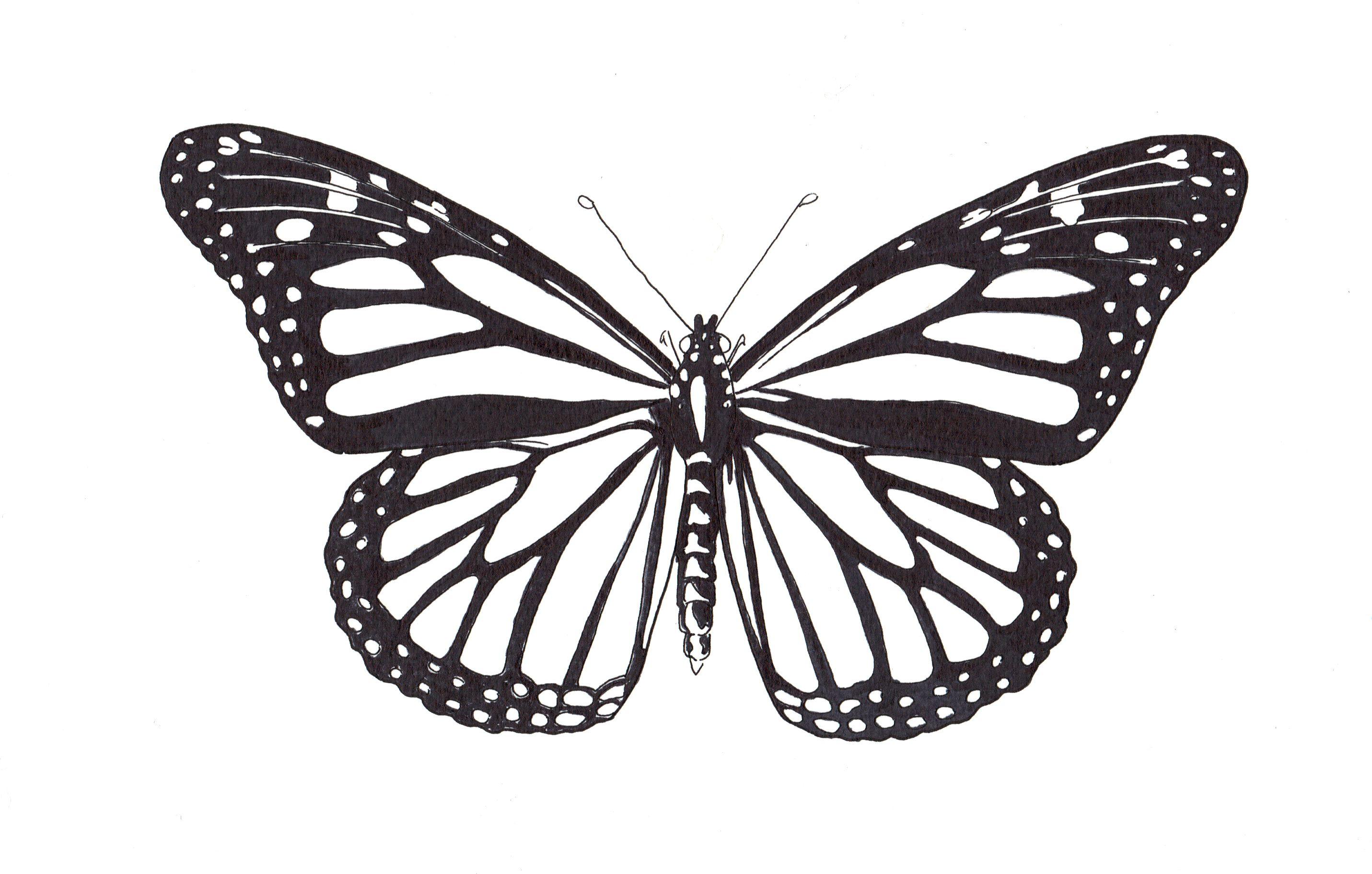 Cafard line up monarque chenille monarque id es pour - Dessin petit papillon ...