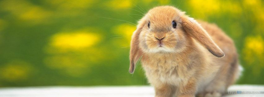 Easter – A Little Easter Bunny on http://www.covermytimeline.com