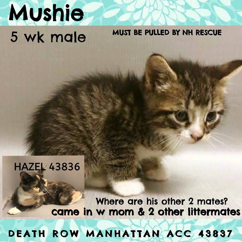 Catsrangels2 On Twitter Animal Welfare Quote Cats Foster Cat