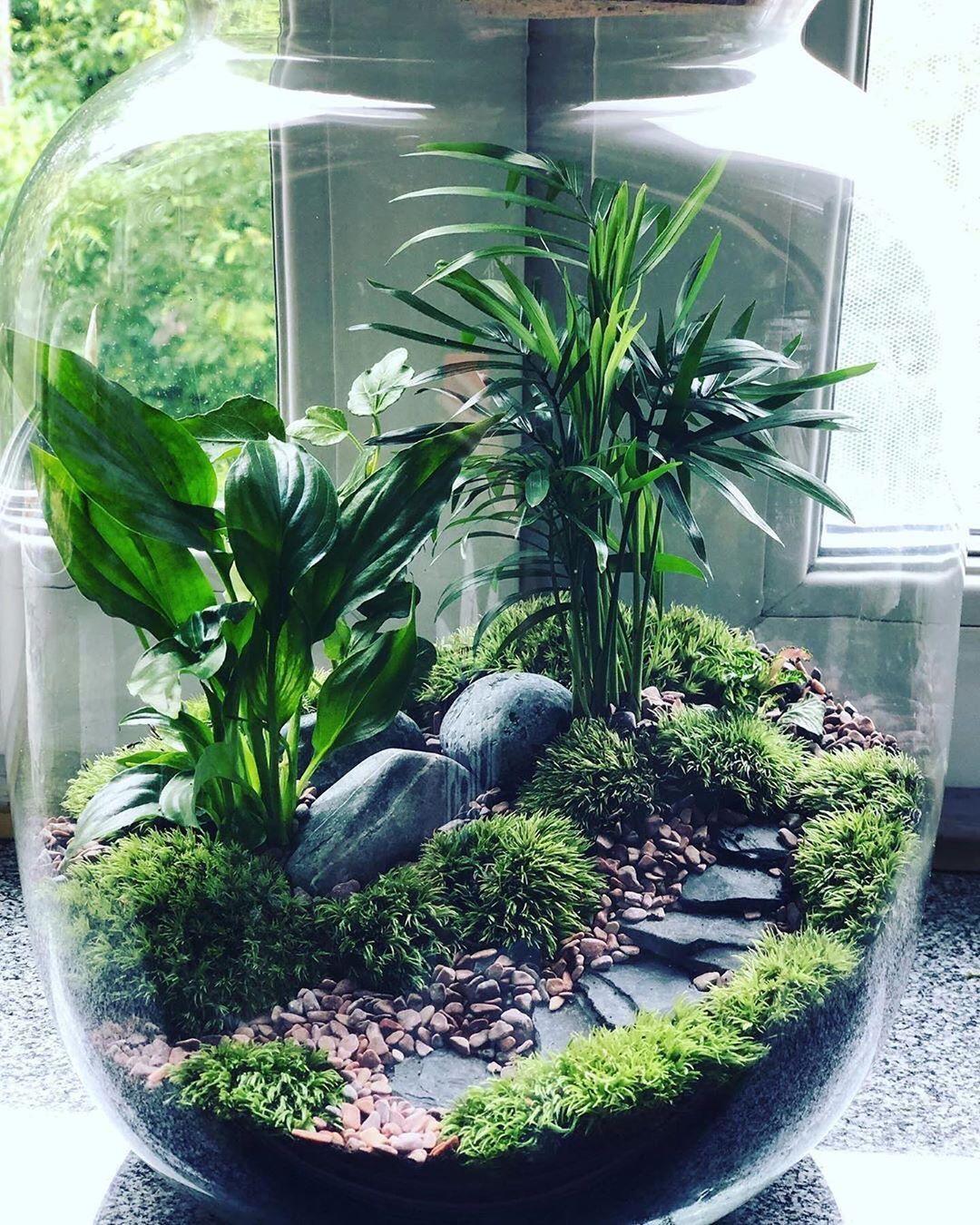 Terrarium Imaginarium on Instagram: