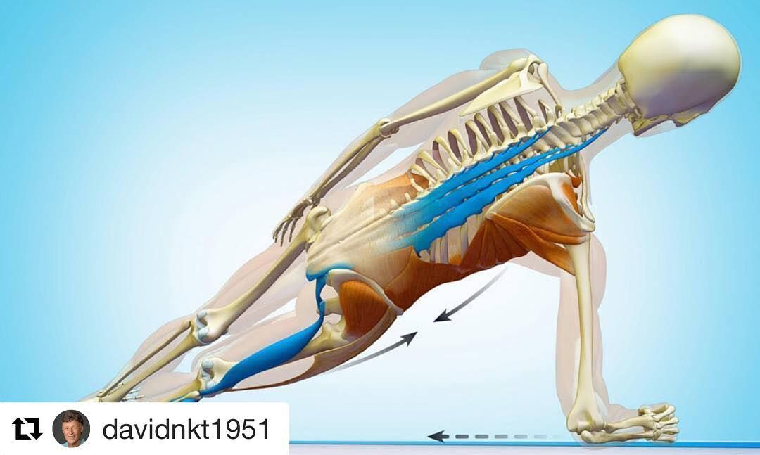 Runners often injure their hamstrings because their glutes ...