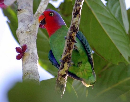 Red Cheeked Parrot Photo By Mehdhalaouate Parrot Birds Kakapo