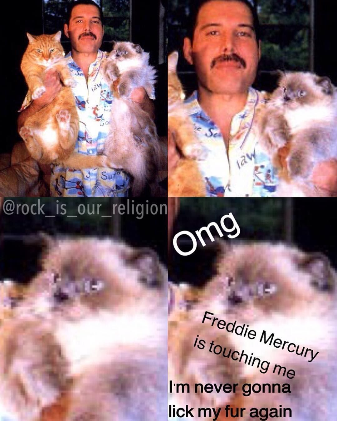 #Cat #Freddie #lives #Mercury #realizes Then the cat realizes that it lives with Freddie Mercury