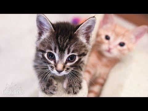 Corsica Her Kittens On Tinykittens Rescue Kitten Tv Youtube