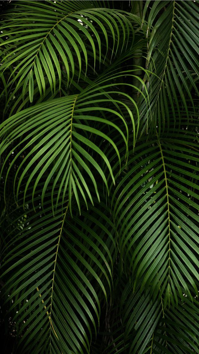 By Hector Falcon Fairchild Tropical Botanic Garden #leaf #plant #vegetation #tree #fern #veins #outdoors