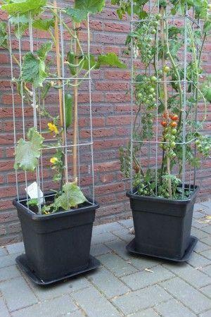 Photo of Welche Pflanzen suchen Unterstützung? – #Pflanzen #suchen #Unterstützung #Welc…