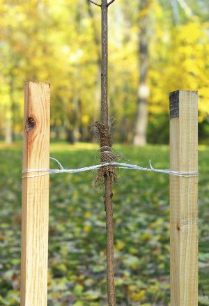 How To Stake A Tree Garden Services Organic Gardening Magazine