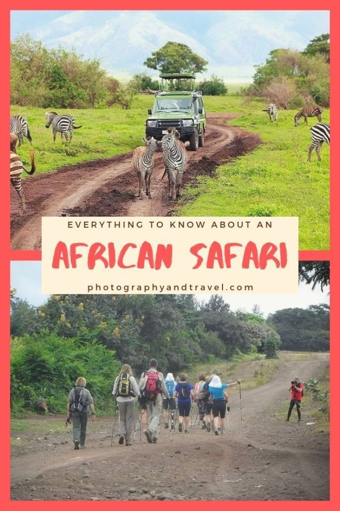 African Safari-Everything You Need to Know – Photography & Travel #safari #afr... -  African Safari-Everything You Need to Know – Photography & Travel #safari #africa #africansafari  - #afr #African #FamilyTravelbudget #FamilyTraveldestinations #FamilyTravelgoals #FamilyTravelillustration #FamilyTraveljapan #FamilyTravelkids #FamilyTravelphotography #FamilyTravelpictures #FamilyTravelquotes #FamilyTraveltips #photography #safari #SafariEverything #Travel