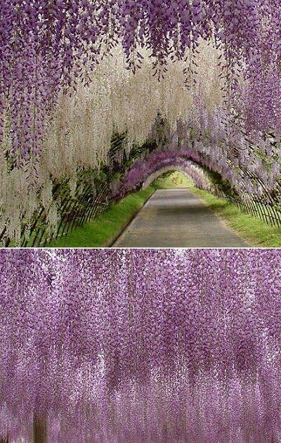 Japanese Flower Garden Japanese Flowers Flower Garden Purple Flowers Garden