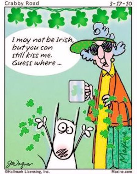 I may not be irish funny lol maxine humor st patricks day