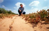 Drought now affecting two thirds of Texas