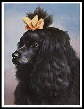 POODLE BLACK DOG HEAD STUDY LOVELY VINTAGE STYLE DOG PRINT POSTER