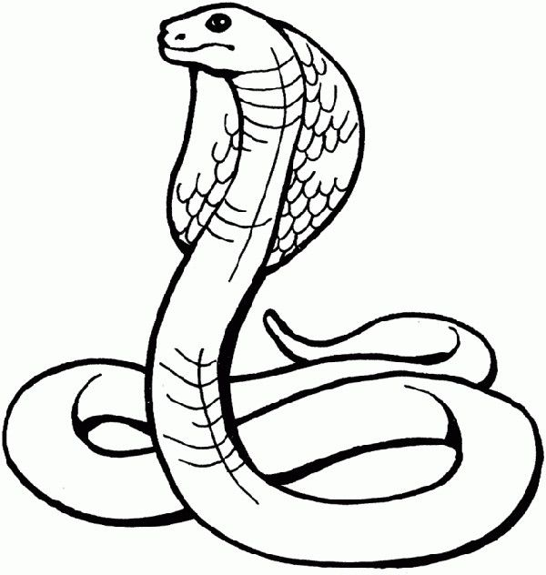 Animal Coloring Pages For Kids Snake Coloring Pages Kids