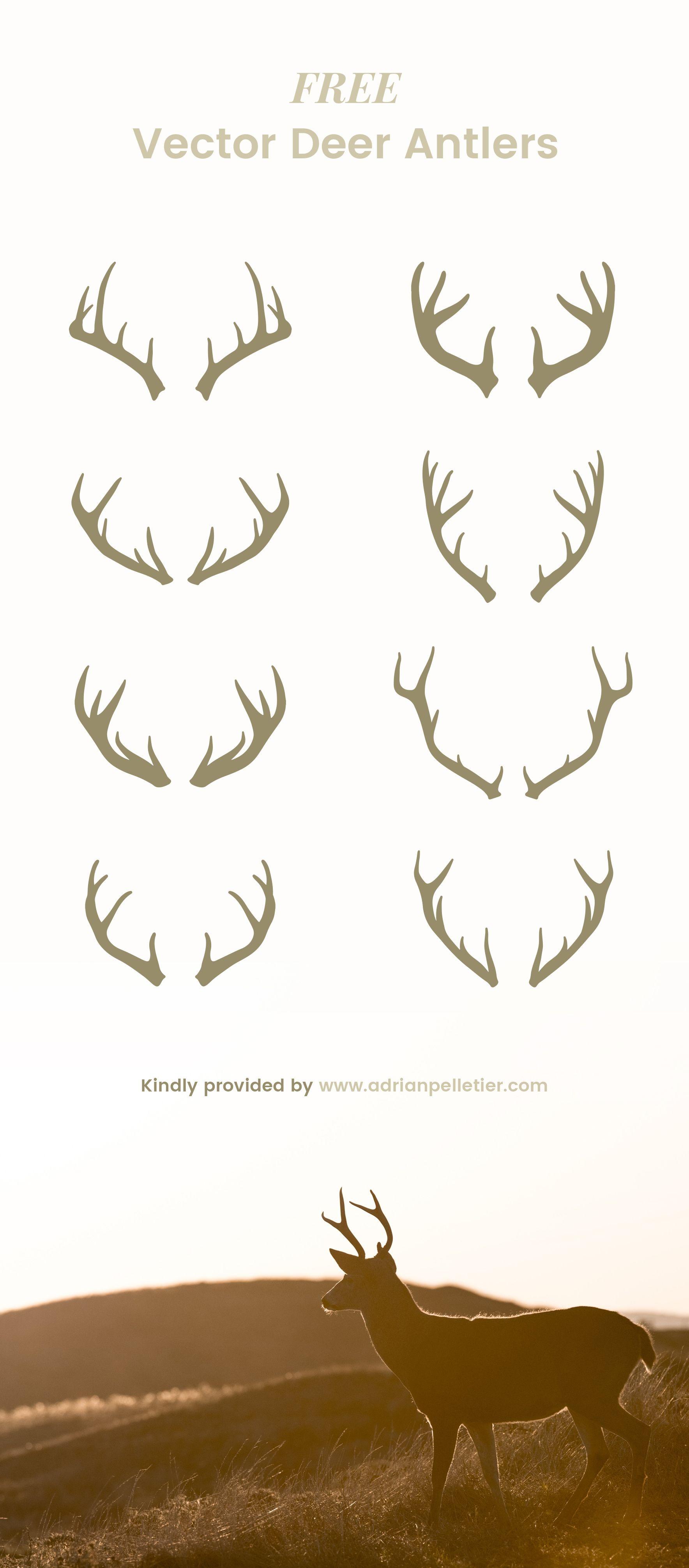 Free Vector Deer Antlers. free freebies freeresource