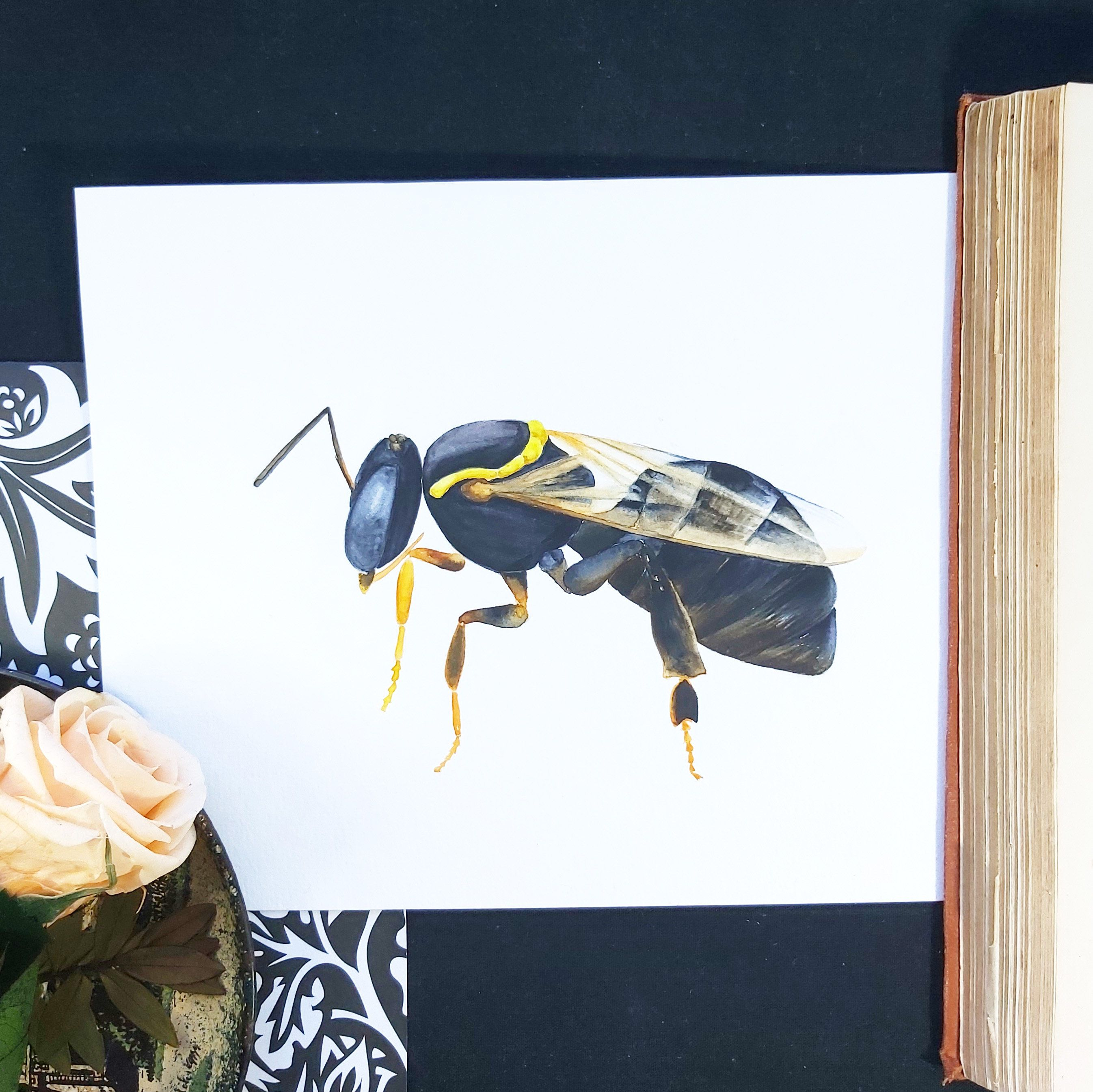 Watercolour painting   Australian native Sugar-bag bee (24 x 16cm)   Wildlife illustration   Natural world design   Original drawing #GardenCreatures #NativeBee #ColeopteraPoster #InsectLoverArt #BeeKeeping #InsectStudy #AussieAnimals #SocialSpecies #VictorianInsect #PollinatorArtwork