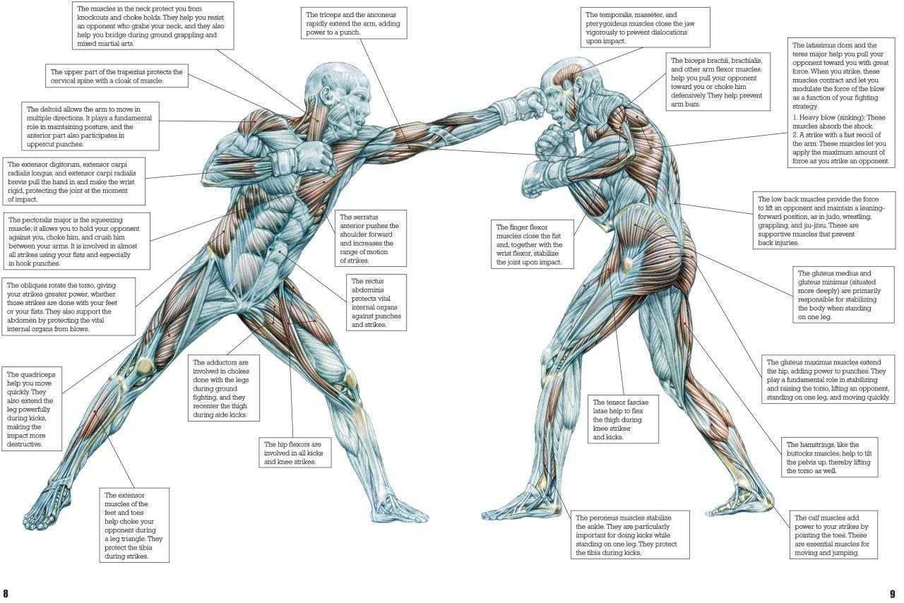 Mix Martial Arts Training Anatomy Art Frederic Delavier #Delavier ...