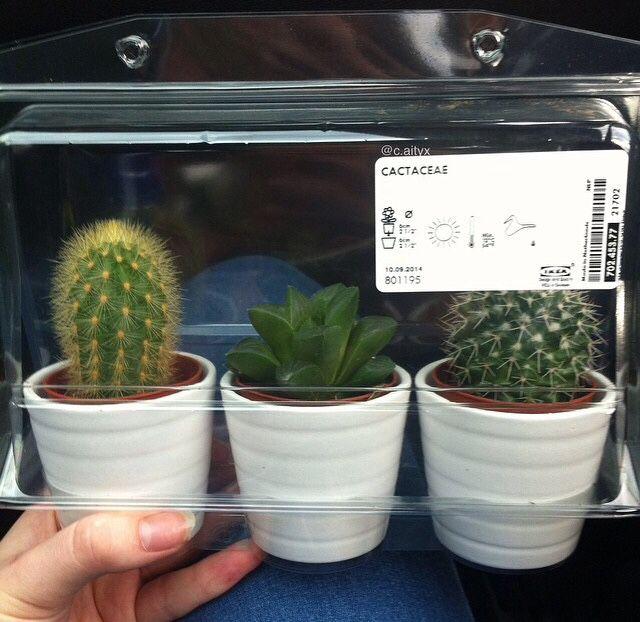 ily tiny ikea cacti tumblr pinterest kaktus und deko. Black Bedroom Furniture Sets. Home Design Ideas