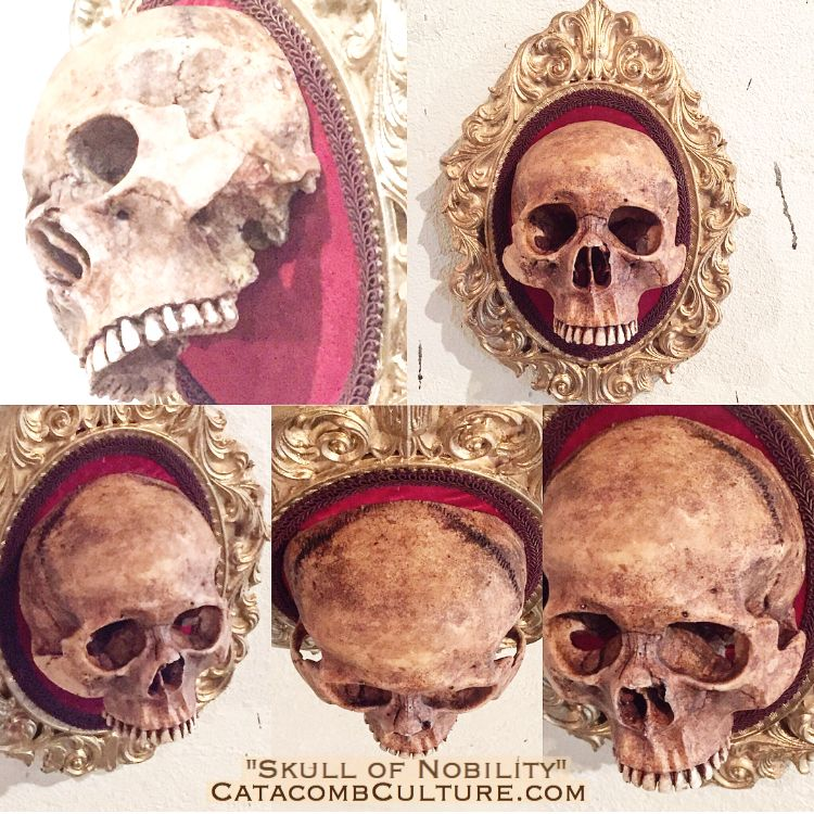 Skull of Nobility - Catacomb Culture  https://www.etsy.com/shop/catacombculture   CatacombCulture.com