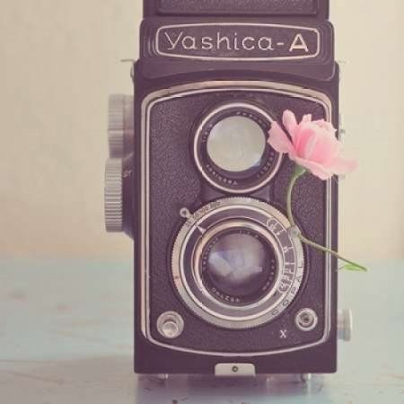 The Old Camera and the Rose Canvas Art - Yvette Inufio (24 x 24)