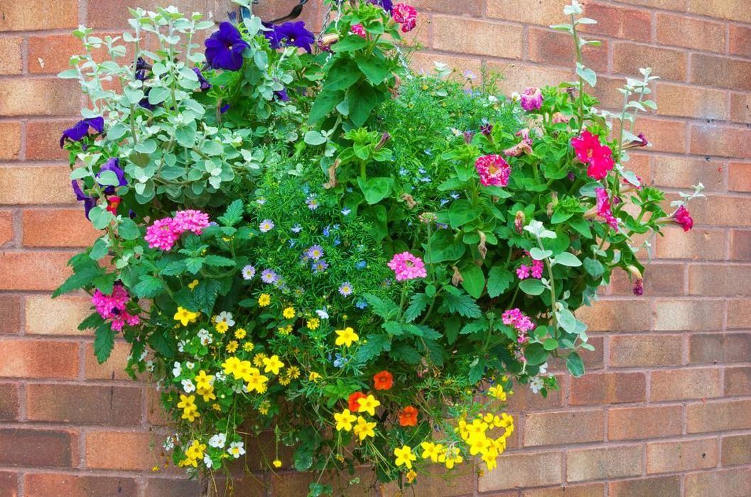 Rosliny Kompozycje Do Skrzynek Balkonowych Growing Seeds Plants Hanging Baskets