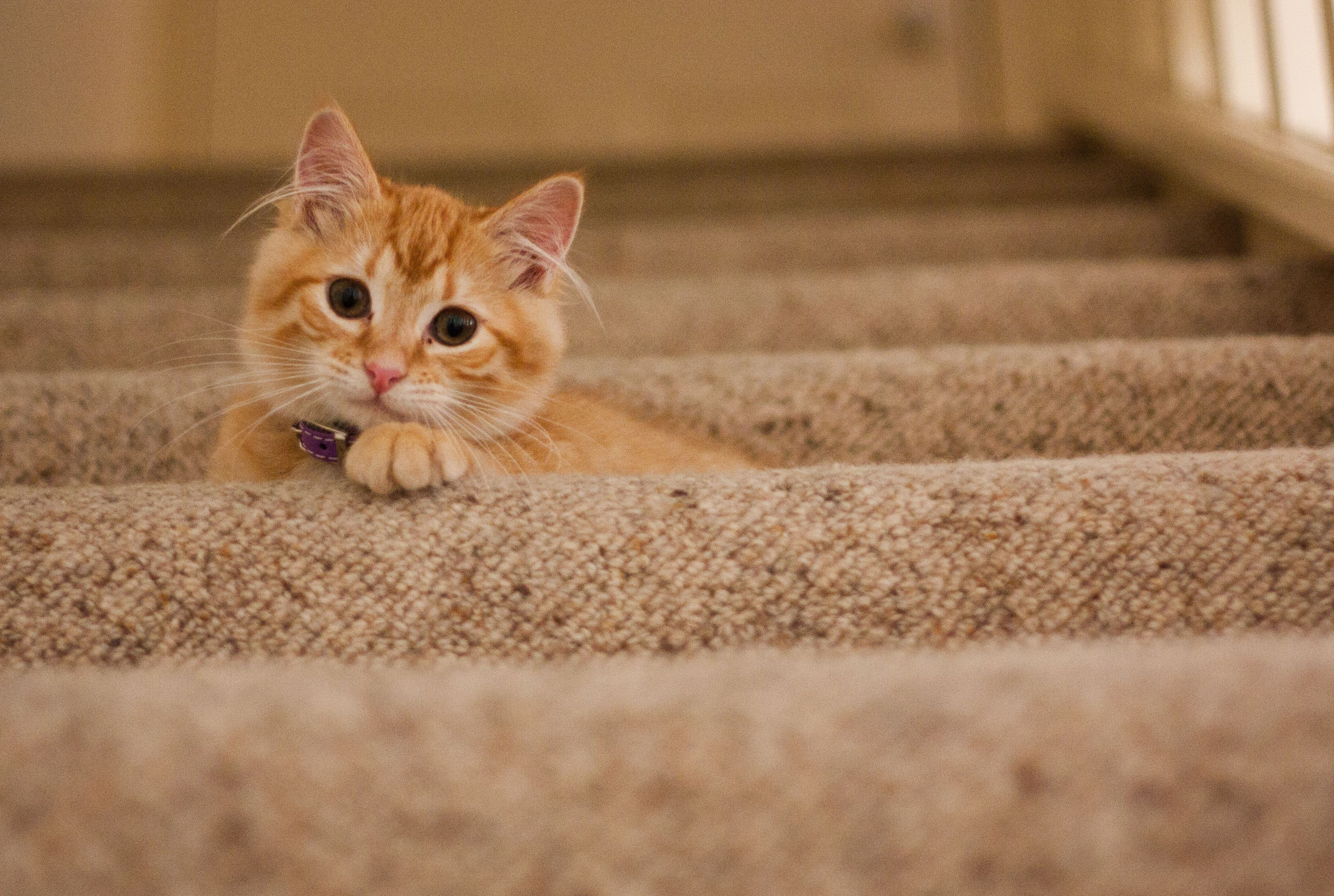 Learn a lot about cats with these simple tips want additional info