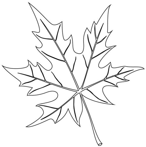 Feuille d 39 arbre dessin - Coloriage feuille d arbre ...