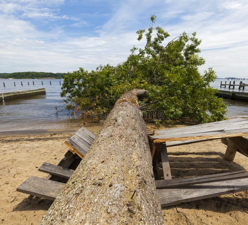 Derecho an fallen oak tree on a crushed picnic table