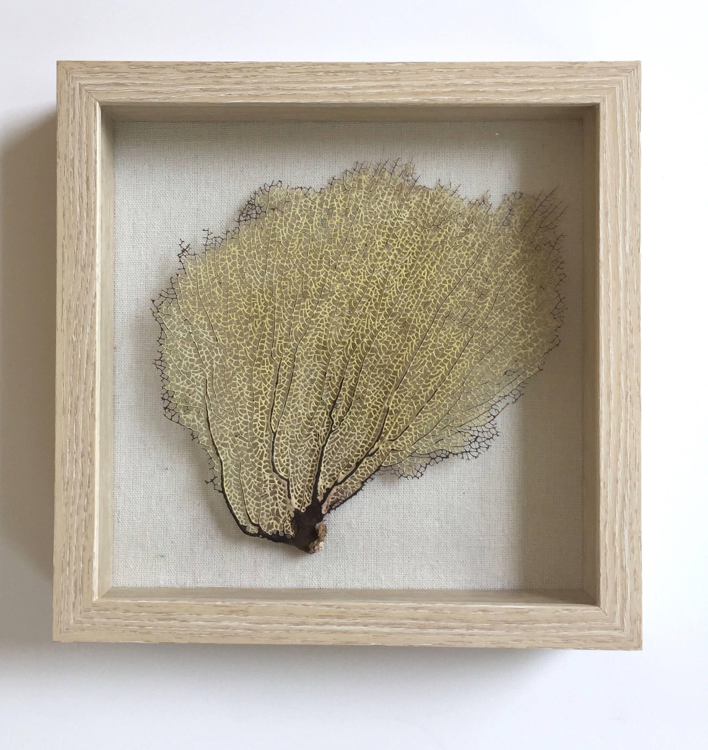Preserved natural sea fan coral home decor sea fan sea fan art sea
