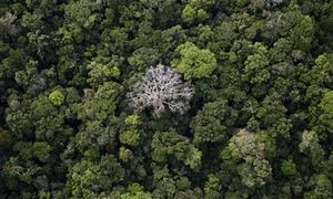 Half Of Tree Species In The Amazon At Risk Of Extinction Say