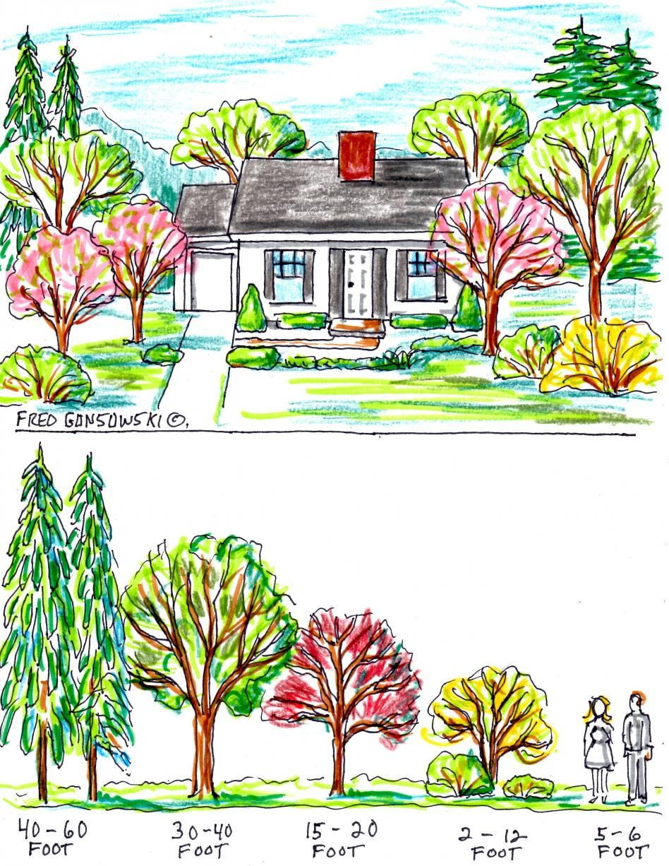 How to plant trees around your house for maximum curb for Plants for landscaping around house