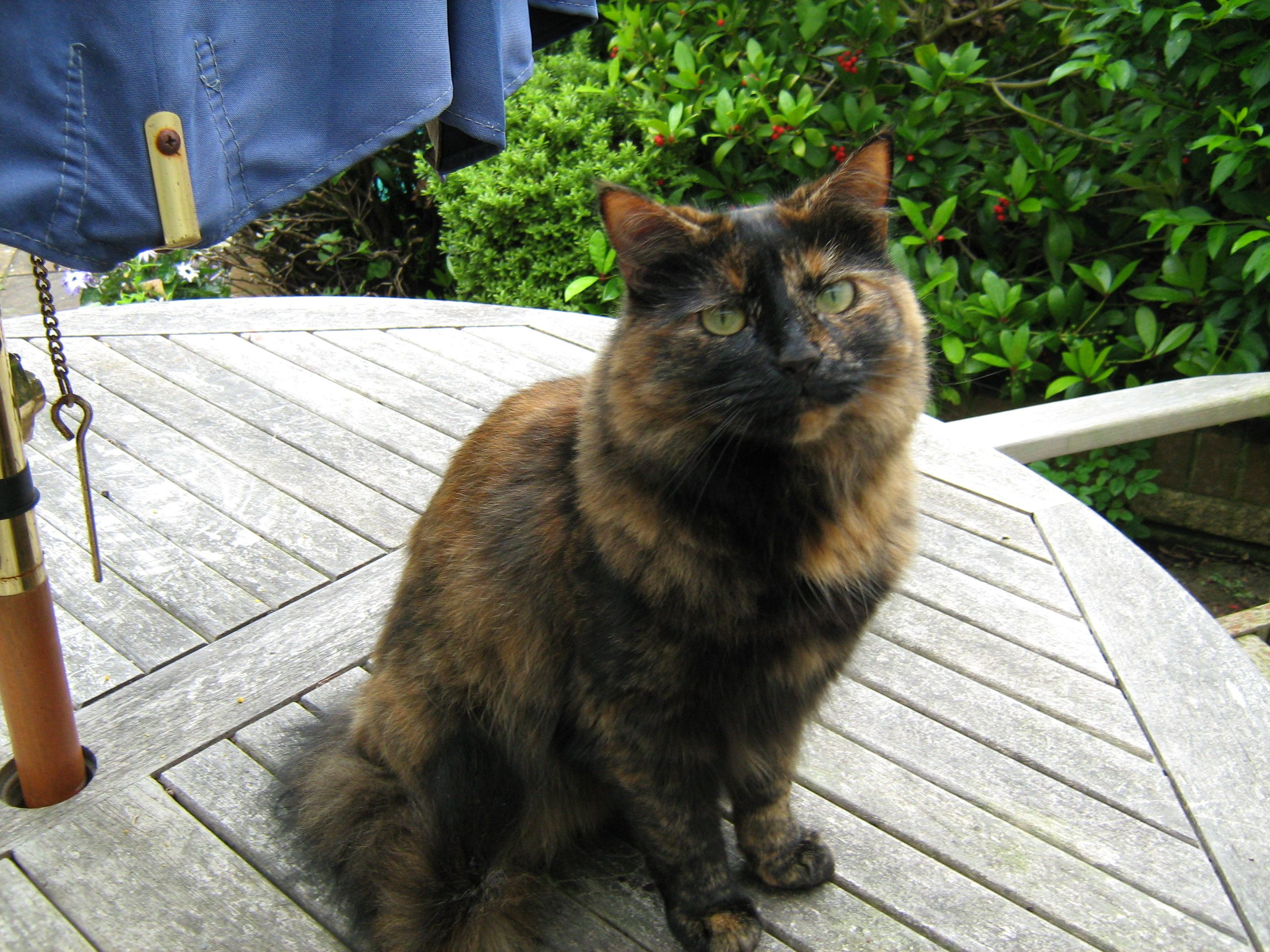 And Here S Girly Who Is Also Sadly No Longer With Us She Wasn T Much Into Beads Unless There Was A Mouse Attached To The Cats Jewelry Making Supplies Beads