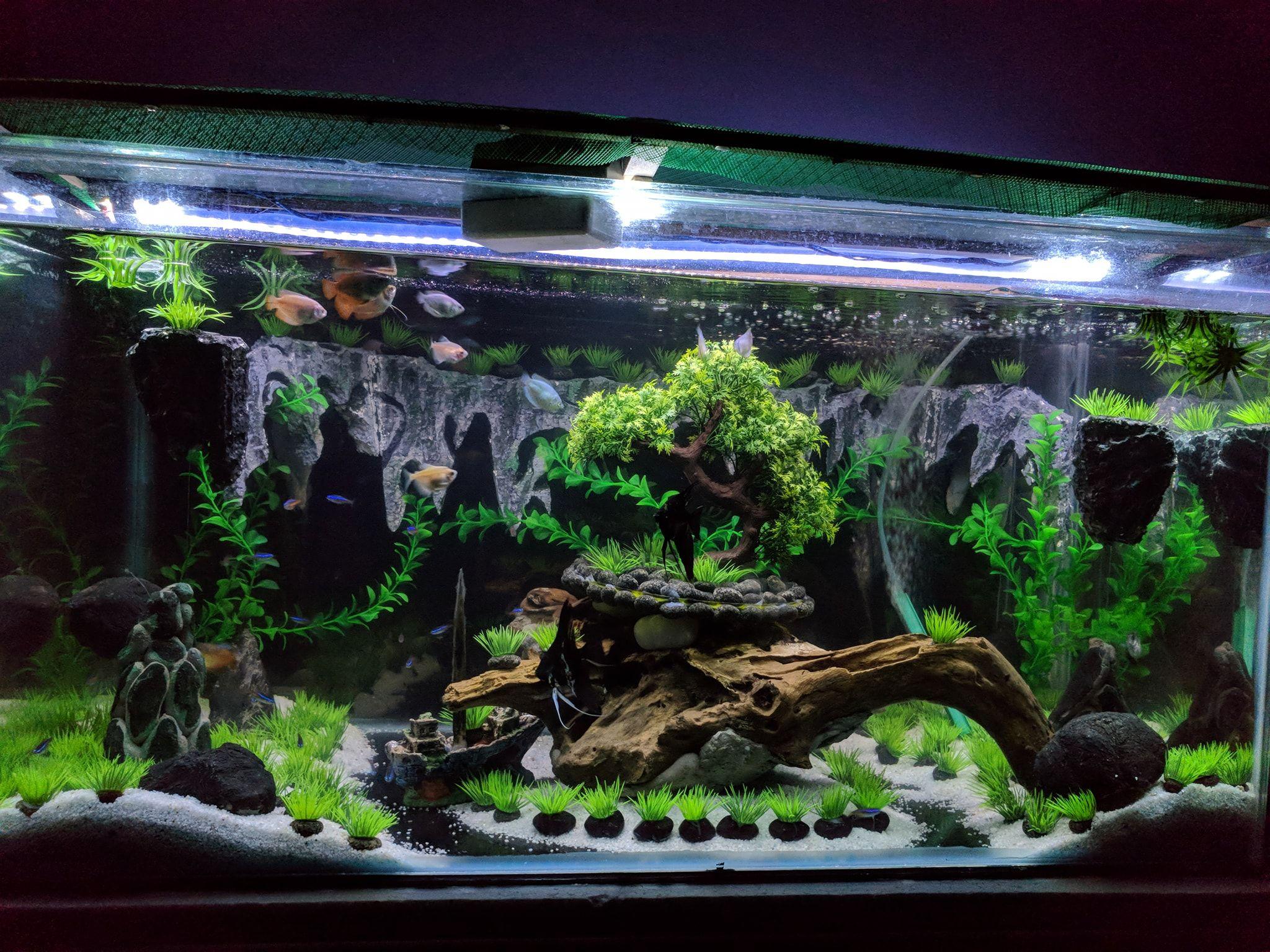 Интересное оформление аквариума фото
