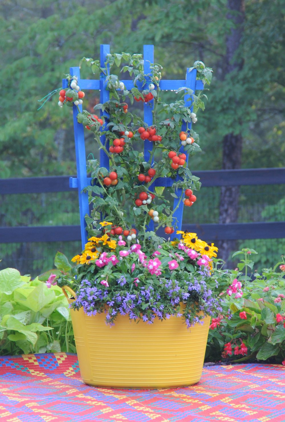 U0027Husky Cherry Redu0027 Tomatoes Form The Centerpiece Of This Trug And Trellis  (www