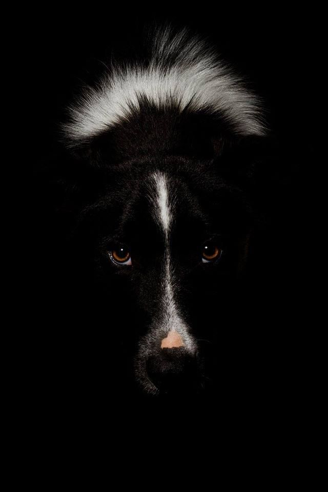 Click Visit Site And Check Out Best Border Collie T Shirts This