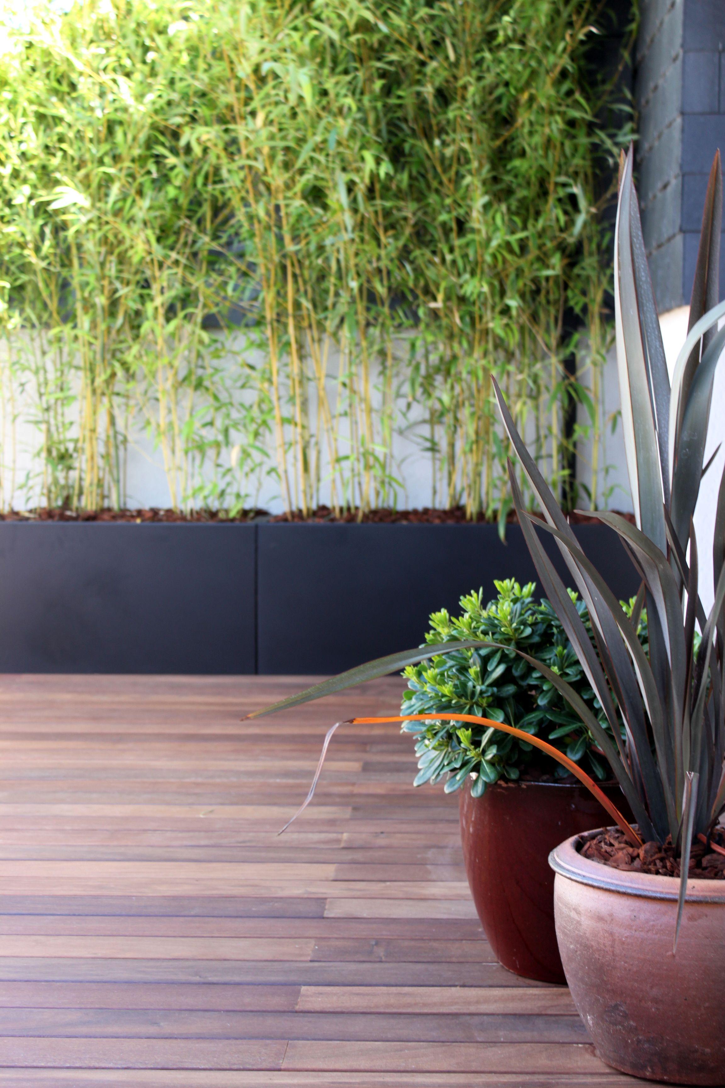 jardín de diseño con detalle de grupo de macetas y combinación de ...