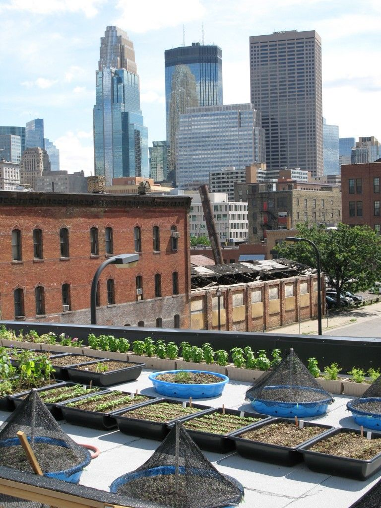 I Need To Eat Here It Is Downtown Minneapolis And They Grow Their Own Food On The Roof As Well Support Local Farmers