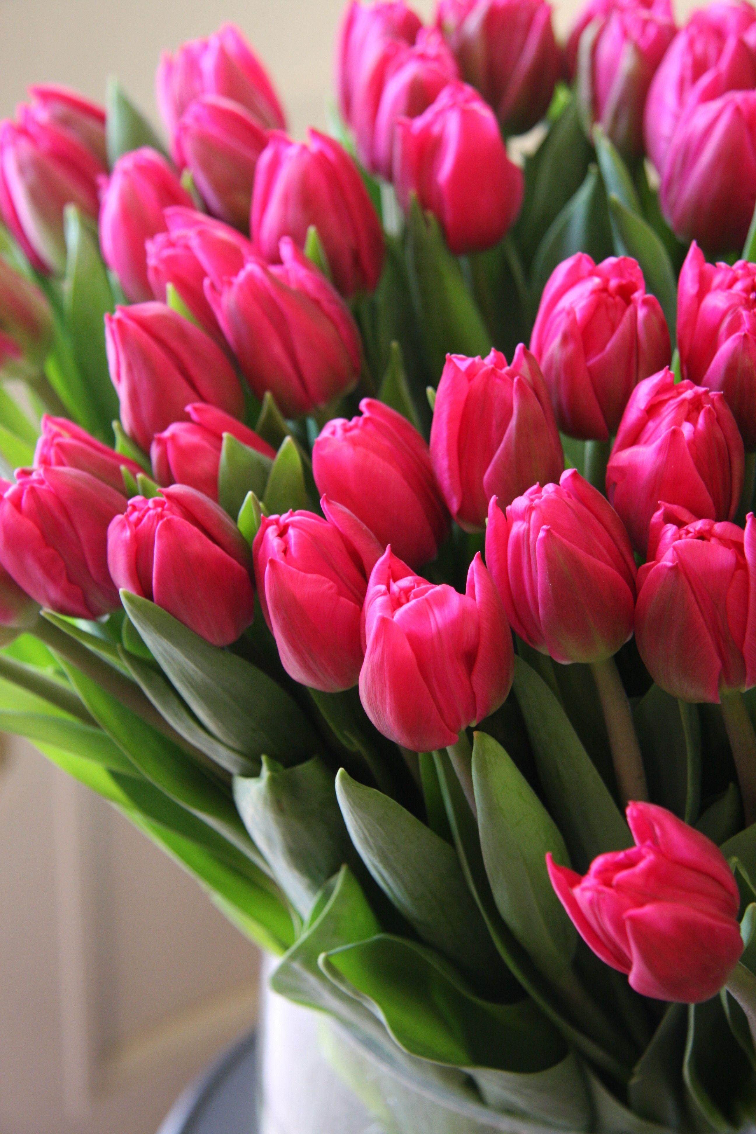 обои на телефон цветы тюльпаны - Twin Monica  Обои на Телефон Цветы