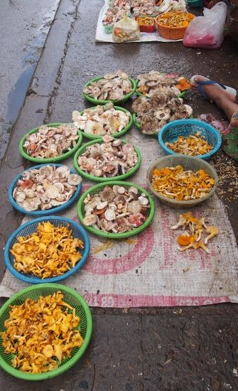 Discover the markets of Luang Prabang, Laos, with us. Wild Mushrooms and so much more!