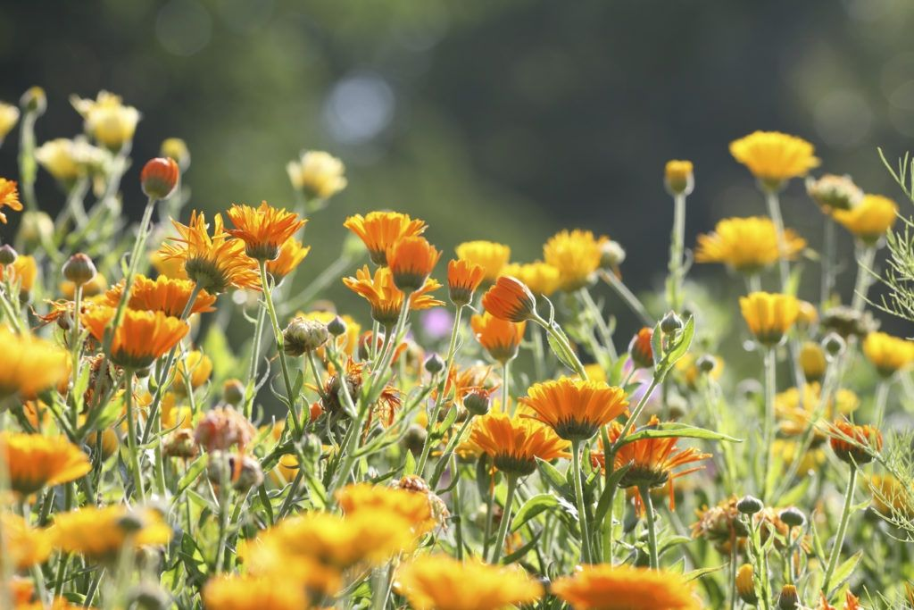 47 Beautiful Flower Arrangements that You Can Eat Edible