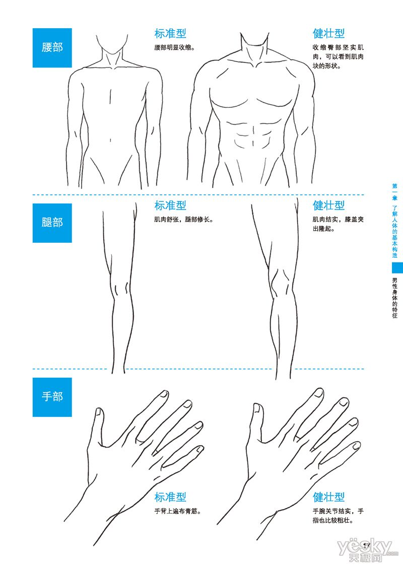 How To Draw Tutorial Muscular Versus Thin Male Body Anatomy Torso Diagram Muscle Legs Hands