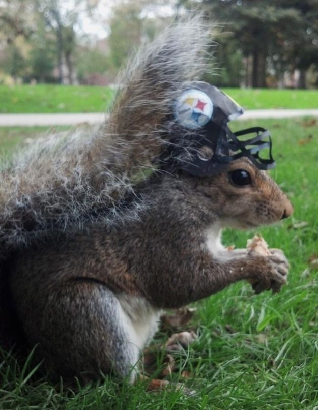 Yinz rootin' for the Stillers? | Meet Sneezy, The Penn State Squirrel Who Loves Wearing Hats